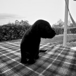 Super Pups 2013